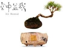 空中盆栽Air Bonsai