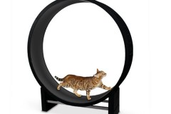 One Fast CAT宠物猫锻炼旋转运动轮跑步机