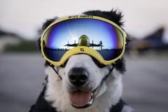 REX SPECS犬用护目镜
