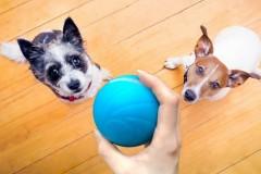 七布Cheerble疯狂跳跳球Wicked Ball宠物玩具